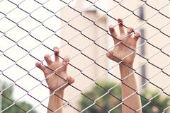 Hands of a woman on mesh cage Stock Images
