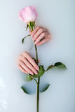 Hands of woman and rose Royalty Free Stock Photo