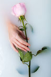 Hands of woman and rose Royalty Free Stock Image