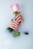 Hands of woman and rose Stock Photo