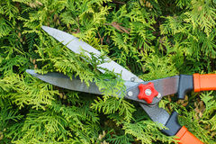 Hands of woman uses gardening tool to trim bushes Royalty Free Stock Images
