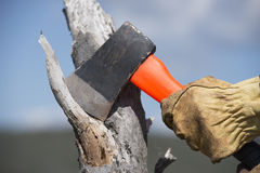 Hands of woodchopper with axe on tree. Hand with yellow gloves holding used axe with blade on tree stump, chopping wood in forest, with sky as blurred background Royalty Free Stock Photo