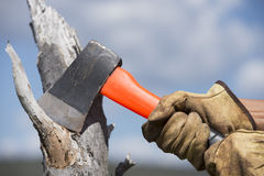 Hands of woodchopper with axe on wood. Hands with gloves holding used axe with blade on tree stump, chopping wood in forest, with sky as blurred background and Royalty Free Stock Images
