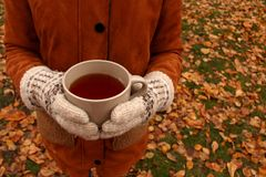 Hands in woolen warm gloves holding cup of hot black tea against unfocused fallen leaves and green grass. Autumn outdoor morning. Breakfast in park Royalty Free Stock Image