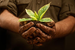 Hands of workers farmer that holds fresh young plant royalty free stock image