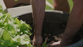 Hands working with dirt. Strong hands working with dirt stock video footage