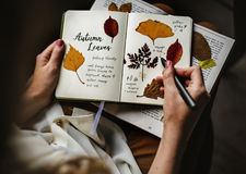 Hands Writing Detail of Dried Flowers Collection in Notebook Han Royalty Free Stock Photo