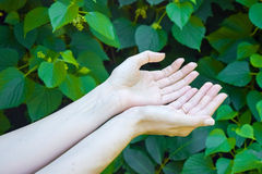 Hands of young girl on green leafs background. Ecology Royalty Free Stock Photos