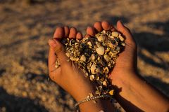 Hands of a young girl with a handful of seashells and sand in the form of a heart in the soft sunset sun on the beach. Mellow heart shaping female hands above royalty free stock image