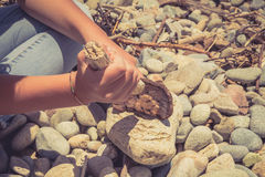 Hands of a young girl holding pieces of wood and making fire on the beach with smooth stones. Royalty Free Stock Photo