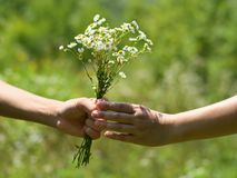 Hands of young man and girl with bouquet of field daisies stock images
