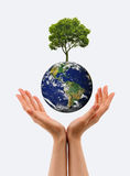 Hands, the young sprout and our planet Earth royalty free stock images