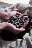 Hands of a young woman and coffee beans Royalty Free Stock Photo