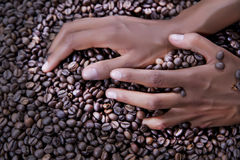 Hands of a young woman and coffee beans Stock Photography