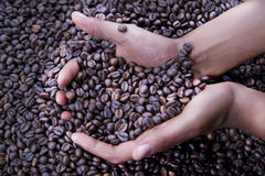 Hands of a young woman and coffee beans Stock Photo