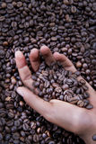 Hands of a young woman and coffee beans Stock Images