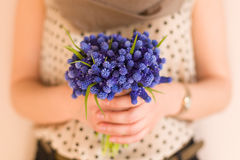 Hands of a young woman holding a bunch of beautiful spring blue flowers. Royalty Free Stock Images