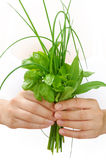 Hands of young woman holding fresh herbs, basil, chive, sage stock image