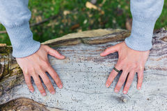Hands of young woman on tree Stock Photos