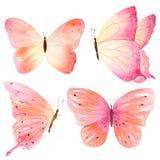 Handschets van gekleurde vlinder Waterverfhand geschilderde inzameling Ideaal voor uitnodigingen, kaarten die, behang, op stof dr royalty-vrije illustratie