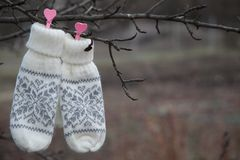 Handschuhe auf dem Baum Lizenzfreie Stockbilder