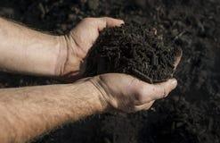 Handsfull del estiércol vegetal Foto de archivo libre de regalías