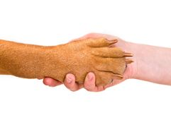 Handshake with a Dog Stock Photography