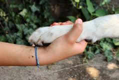 Handshake with a dog. Girl holding her dog!s paw Stock Photo