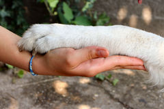 Handshake with a dog. Girl holding her dog!s paw Royalty Free Stock Photo