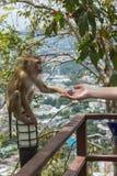 Handshake Between Human Hand And Monkey Royalty Free Stock Photography