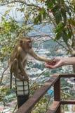 Handshake Between Human Hand And Monkey Stock Image