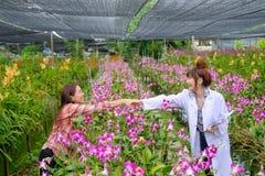 Handshaking badacze i orchidea ogrodowi właściciele zdjęcia royalty free