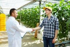 Handshaking i drivhus royaltyfria foton