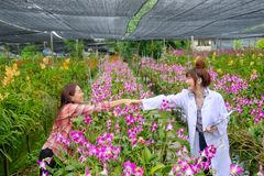 Handshaking researchers and orchid garden owners. Handshaking of researchers and orchid garden owners royalty free stock photos