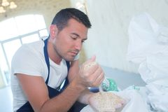 Handsome baker checking cereal quality stock photos