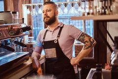 Handsome barista with stylish beard and hairstyle wearing apron posing for a camera while leaning on a counter in the. Portrait of a handsome barista with royalty free stock photo