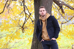 Handsome beard man in autumn. Park posing on camera Stock Photo