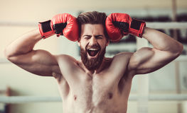 Handsome bearded boxer Royalty Free Stock Photo