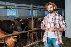 Farmer with fresh milk in stall royalty free stock photography