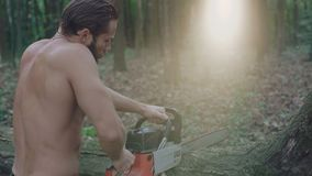 Handsome bearded logger sawing trees with chainsaw in the forest. 4K.  stock footage