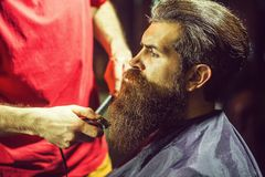 Handsome bearded man in barbershop. Handsome bearded man, hipster, brunette with beard and moustache has haircut or clippering in hairdressing saloon or royalty free stock photo