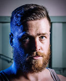 Handsome bearded man. Head shot of an handsome young adult man with big ginger beard and modern hair cut looking at the camera with his beautiful blue-green eyes Royalty Free Stock Photos
