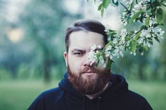 Handsome bearded man royalty free stock photos