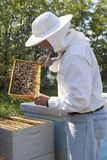 Handsome beekeeper. Beekeeper checking bee colony at field Royalty Free Stock Photo