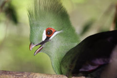 Handsome birds Royalty Free Stock Images