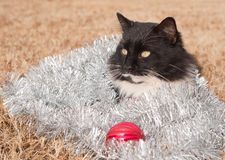 Handsome black and white cat covered in silver tinsel Stock Photos