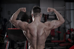 Handsome bodybuilder posing in gym. Perfect muscular male body Royalty Free Stock Photography