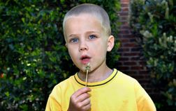 Handsome Boy Blows on a Dandelion stock image