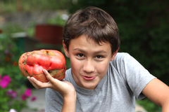 Handsome boy 10 yesars old, holding very big size tomatoes Royalty Free Stock Image