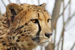 Handsome cat Stock Photos